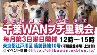 Chibawan_satooyakai_weblog320x180